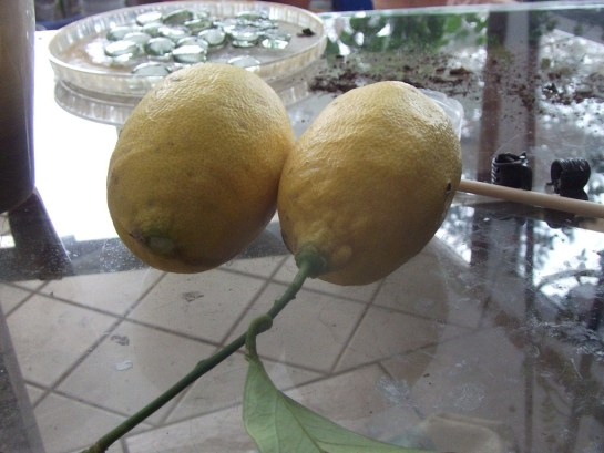 zwei reife Zitronen  :-D